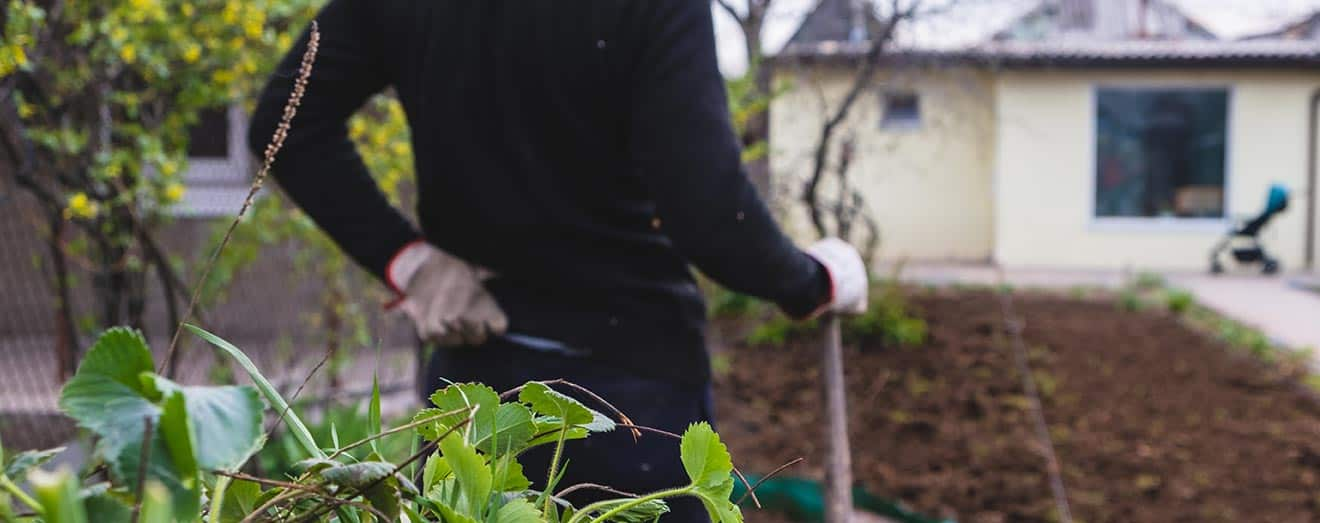 How To Prevent Lower Back Pain While Gardening